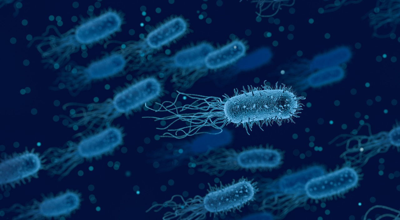 Principales infecciones intestinales causadas por bacterias