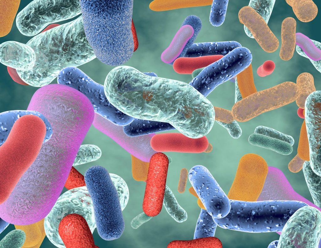 microbiota intestinal celiacos